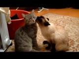 Коты-геи